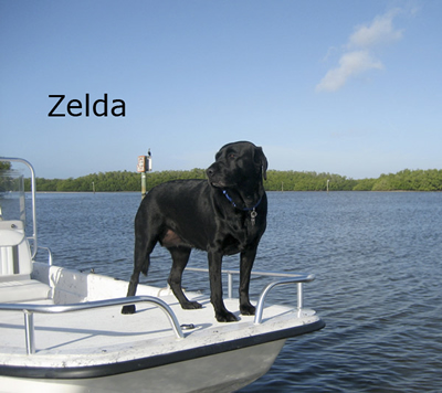 zeldaflorida-copy