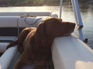 Wally on Boat